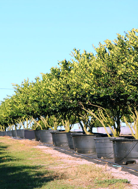 Inventory of Central Florida trees