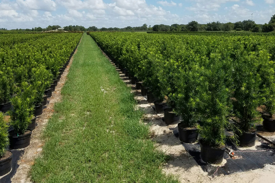 Available Trees and Shrubs in Florida
